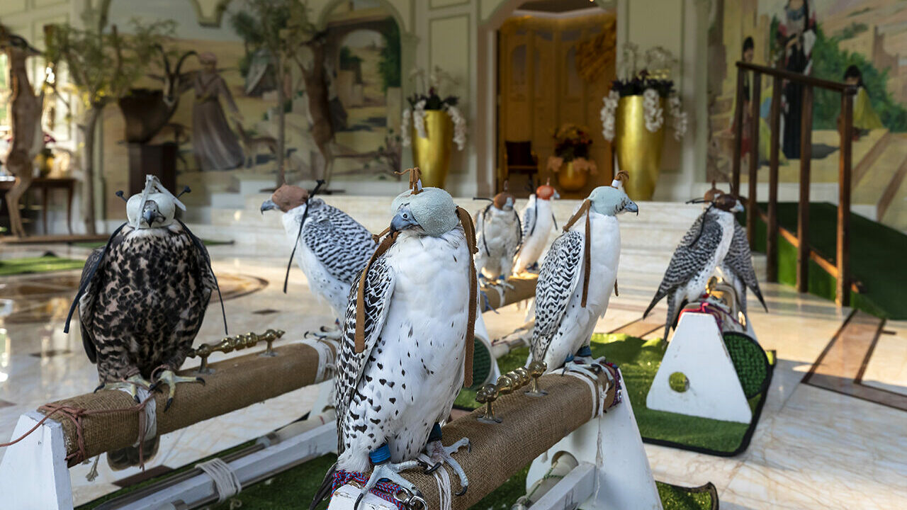 How The United Arab Emirates Became The Center Of Falconry S Gyre Atlas Obscura