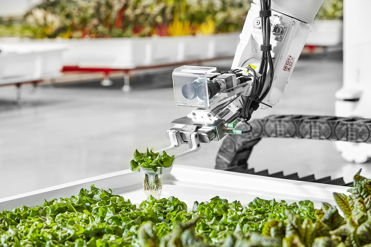 An industrial robotic arm with custom gripper and sensors constantly reorganizes plants as they grow.