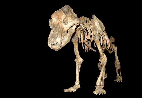 Why Europe's Cave Bears Were—and Weren't—Made for Hunkering Down