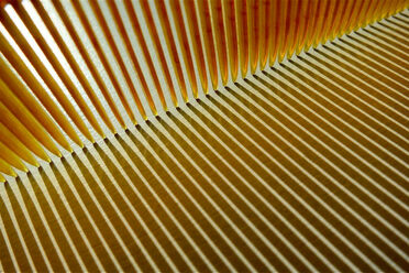 Unbreakable combs can be traced back to 19th-century developments in plastic and rubber.
