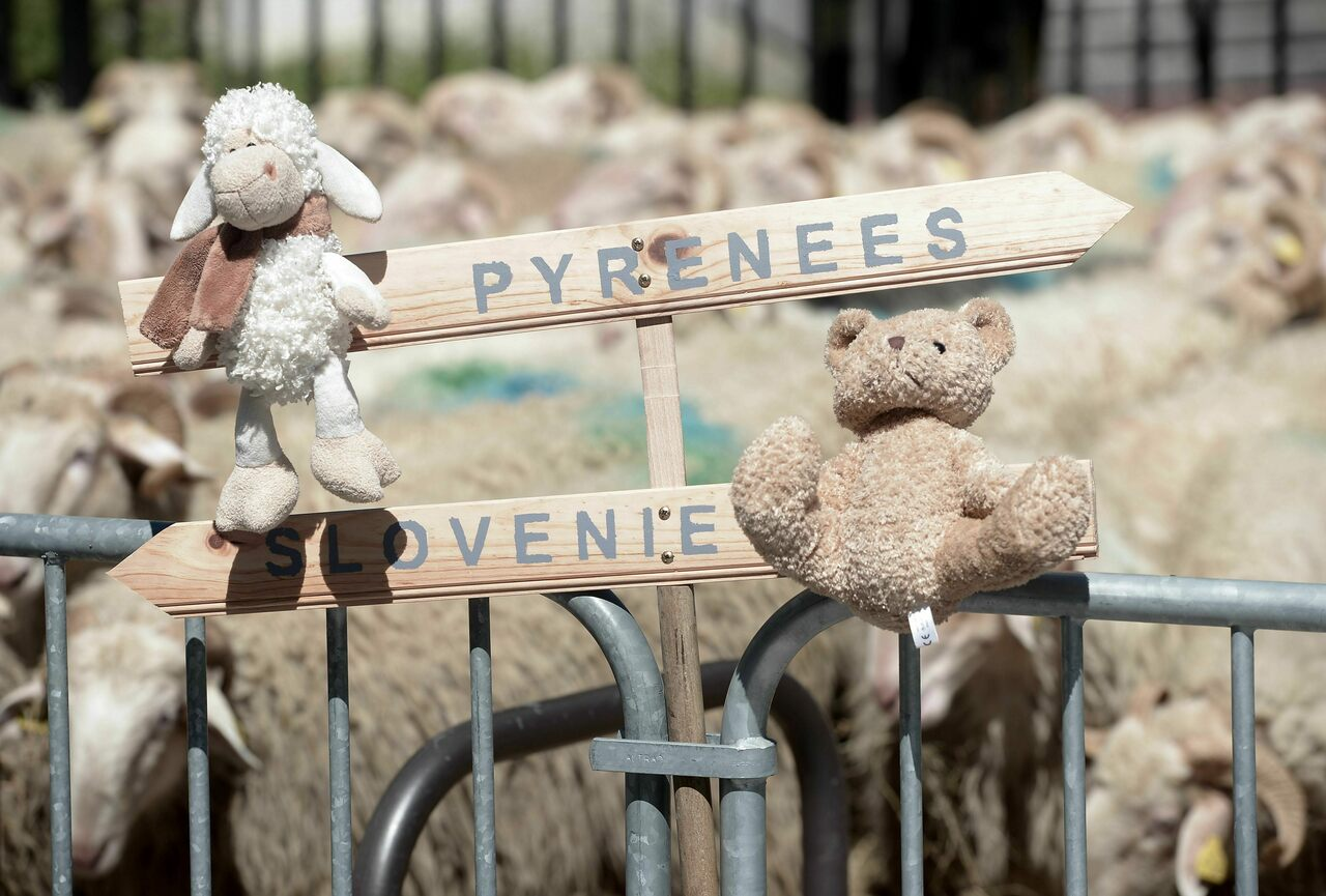 A sheep and a bear square off in a 2018 protest in France.