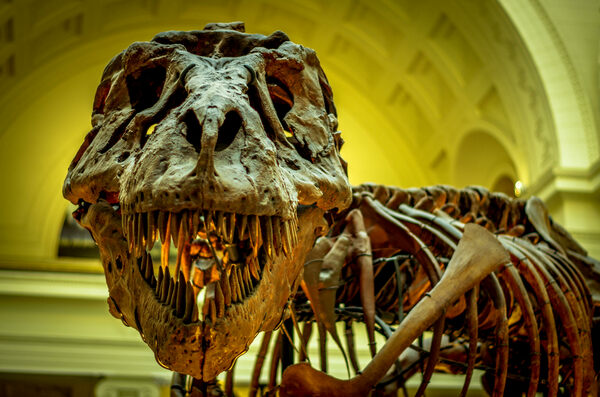 The Thorny Problem of Tallying Every T. rex to Ever Live