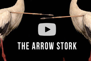 100 Wonders: The Arrow Stork