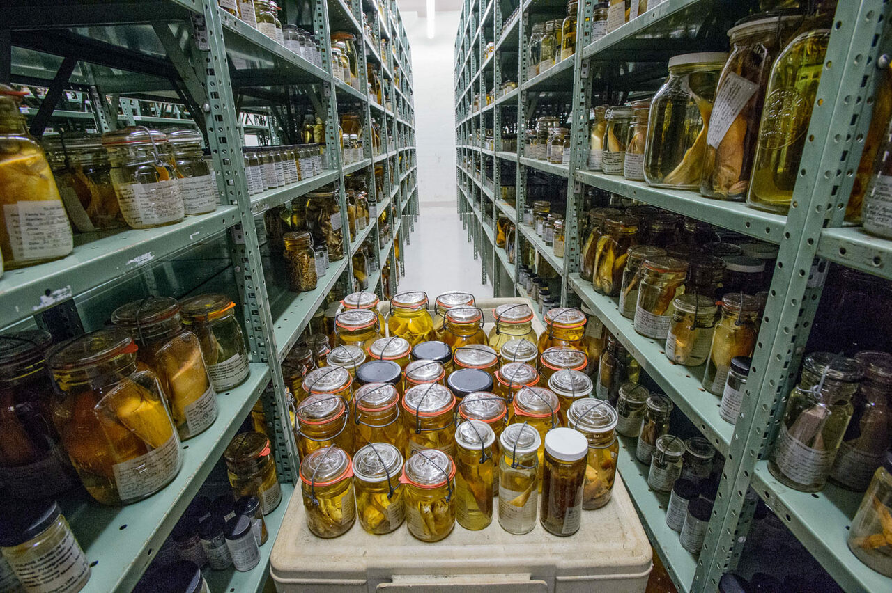 A glimpse inside the largest collection of preserved fish in the world.