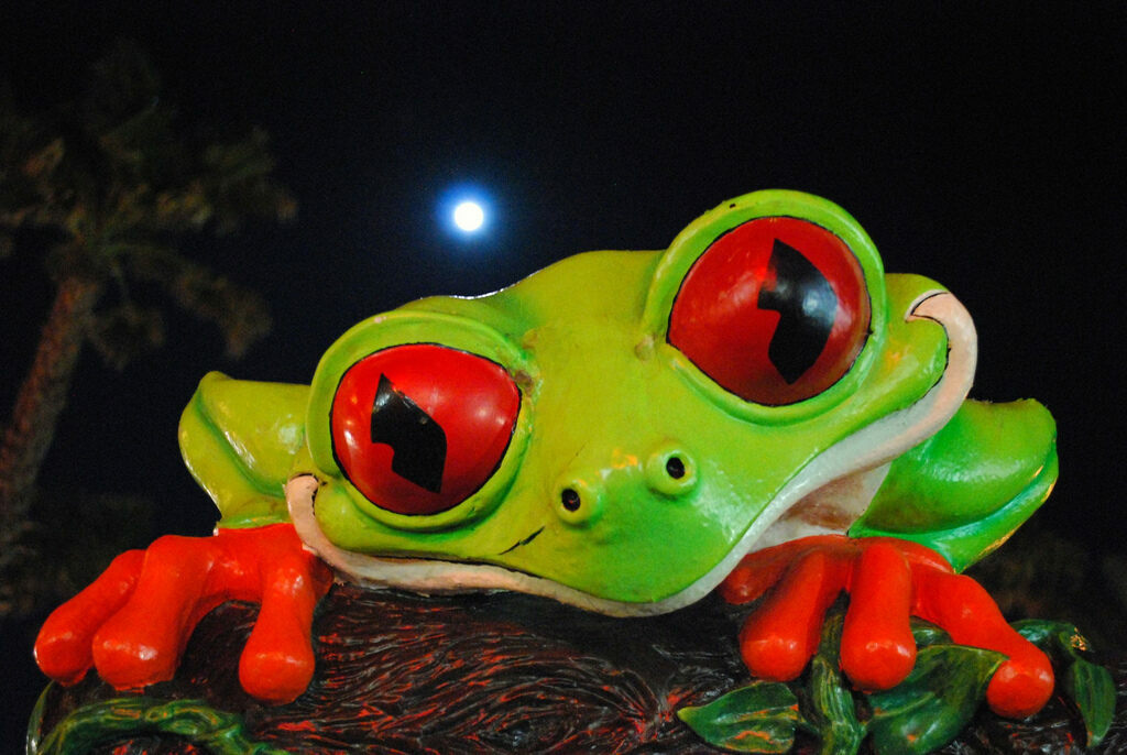 A Rainforest Cafe mascot, Cha Cha the red-eyed tree frog.