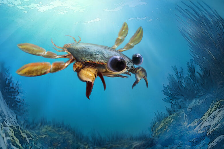 Found: The Goofiest Crab That Ever Lived