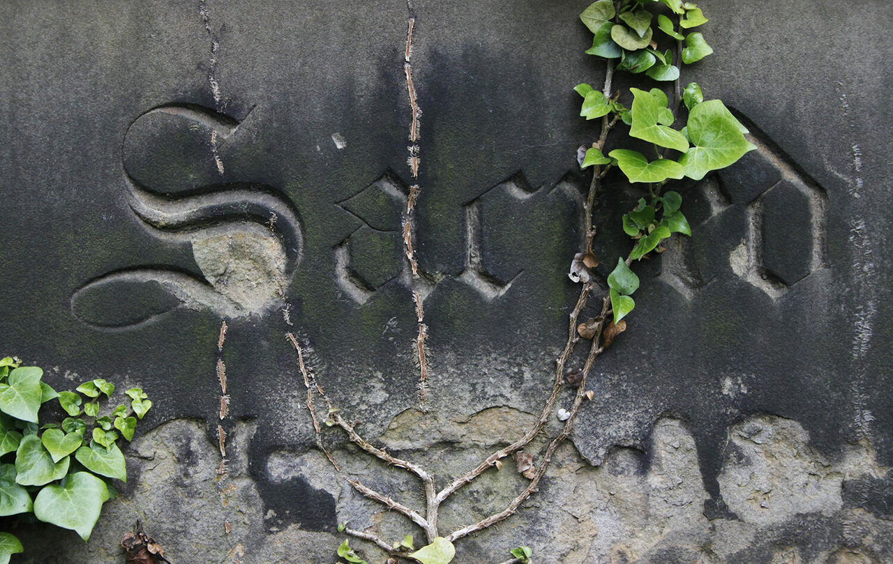 """""""Sacred,"""" carved in gothic script on a Victorian gravestone with ivy."""
