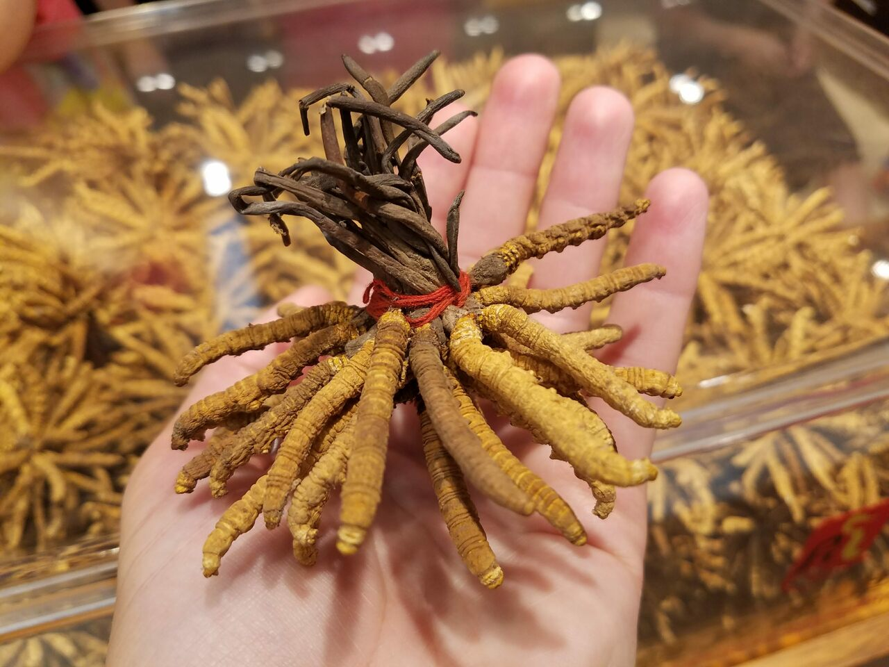 Cordyceps for sale at a high-end Chinese medicine store.