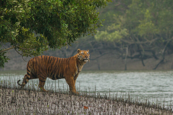 13 Cool and Unusual Things to Do in Bangladesh - Atlas Obscura