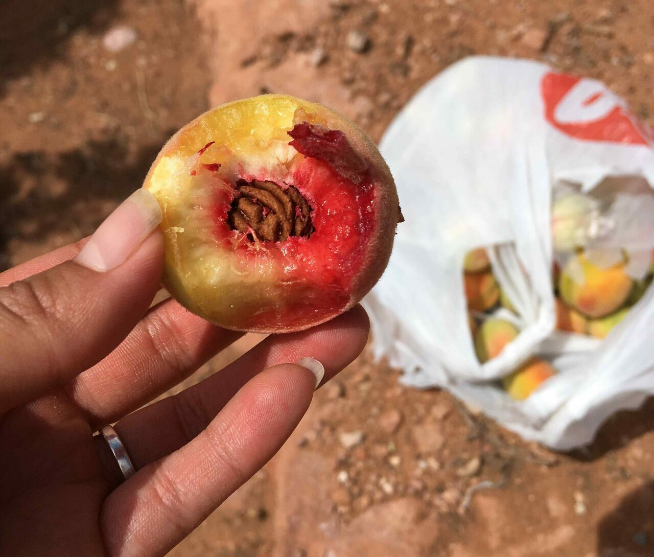 These small peaches once flourished widely over the Southwest.