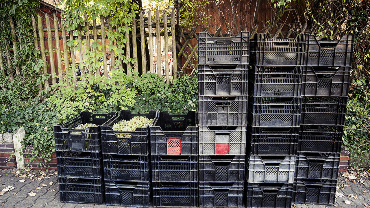 The 2016 harvest for the Kreuzberg vineyard amounts to 27 crates in total.