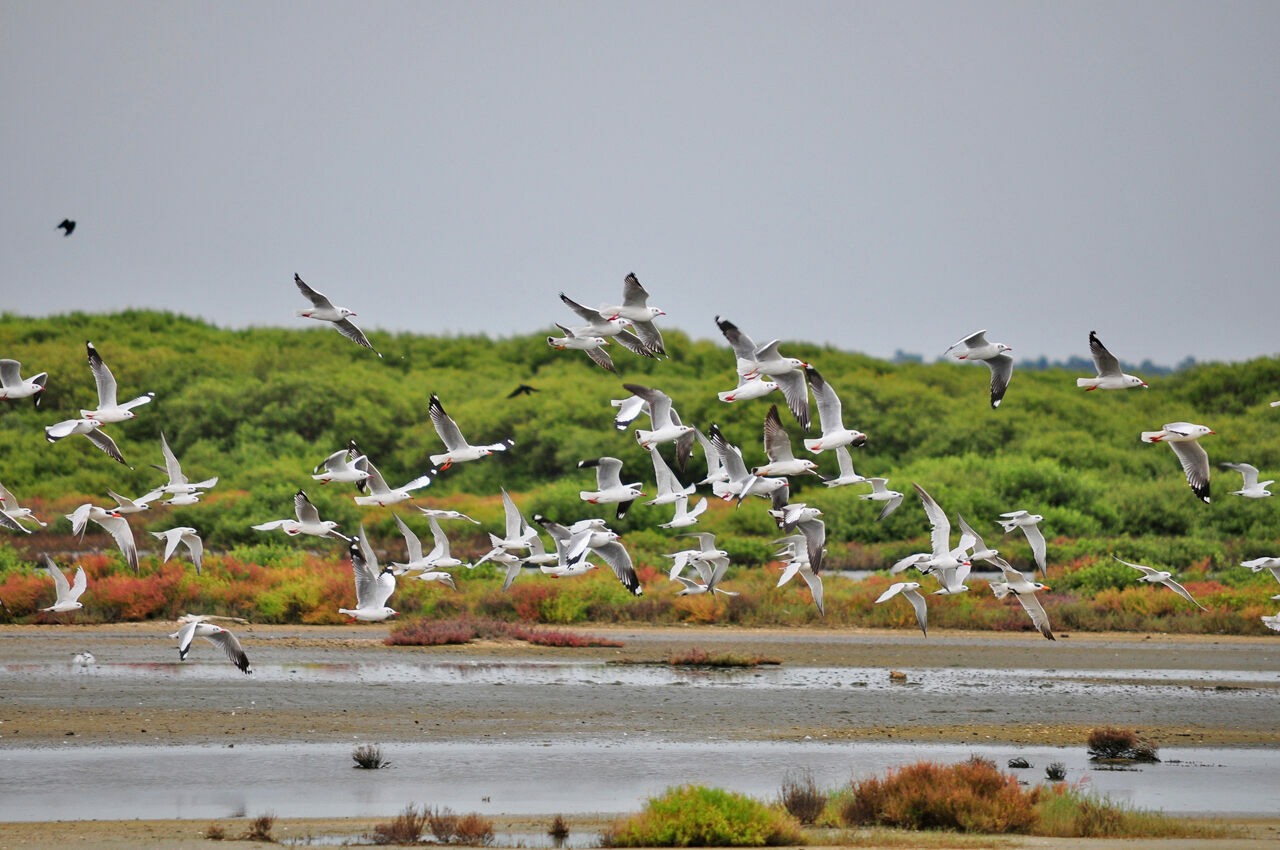 Located on the Jaffna Peninsula, the Thondamanaru Lagoon has become a crucial wetland on the Central Asian Flyway, one of the world's major migratory routes.