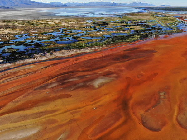 In the Andes, Bright Colors Tell the Dark Story of a Dying Lake