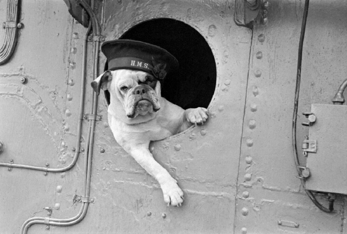 Venus, the bulldog mascot of the destroyer HMS <em>Vansittart</em>.