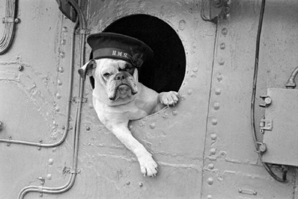 England's Forgotten Pet Massacre of 1939 - Gastro Obscura