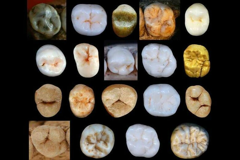These Tiny Teeth Suggest Neanderthals Evolved Earlier Than We Thought