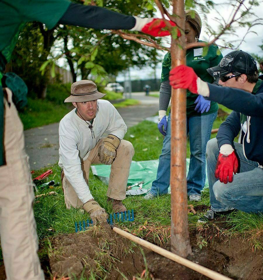 """Community groups, or """"delegations"""" to the Boston Tree Party,  planted pairs of apple trees in public spaces around Boston."""