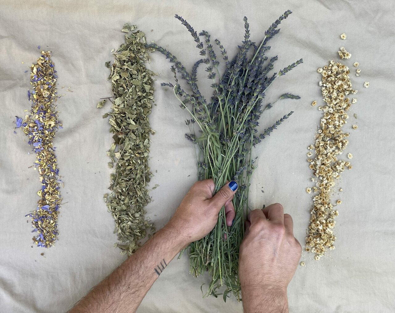 David Shorter prepares herbs from his garden to make tinctures. From left to right: blue lily flowers, calea zacatechichi, lavender, and gordolobo.