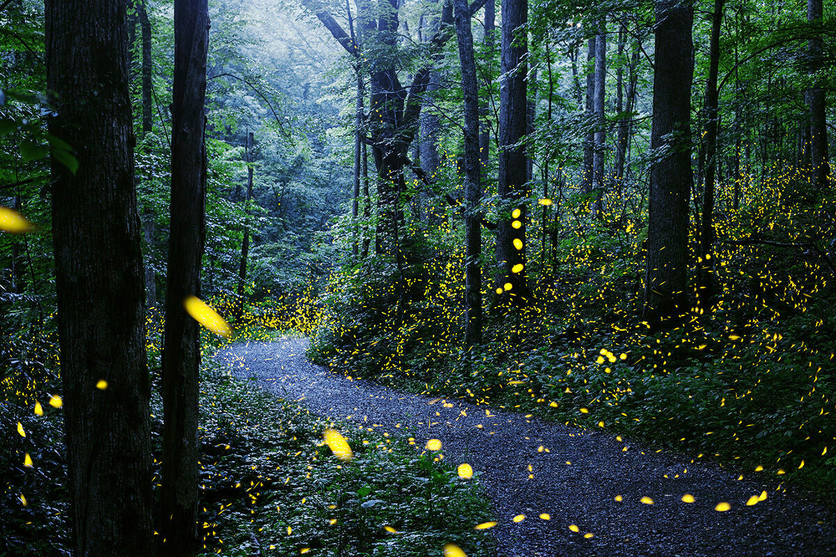 A time-lapse photo of fireflies, aglow in the Great Smoky Mountains.