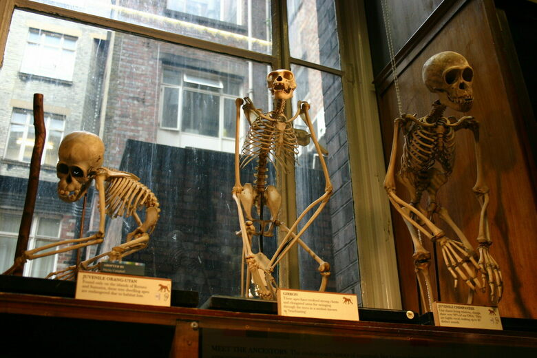 In London, Natural History Museums Confront Their Colonial Histories