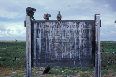 Hawaiian seabirds exult in their power over the economy.