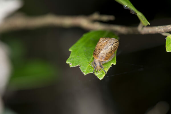 What Tiny Snail Poop Could Mean For Latin America's Coffee Farms