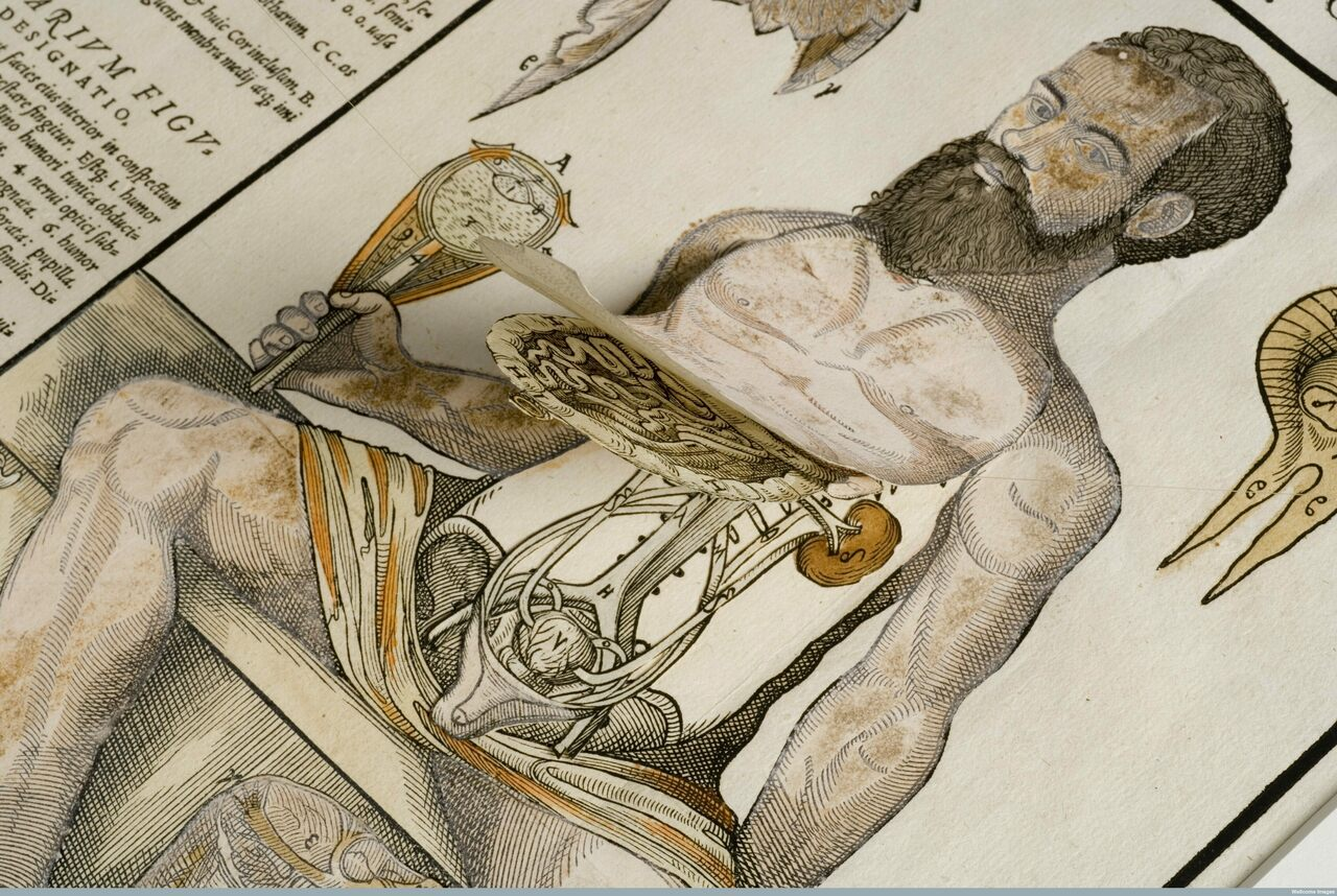 Anatomical fugitive sheet of a male figure, 1573.