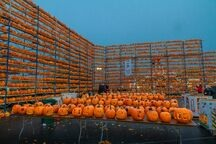 Fleeting Wonders: 27,581 Pumpkins Colonize a Town in Illinois