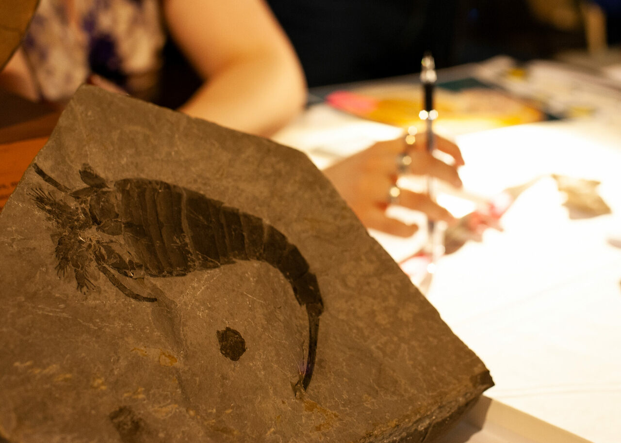 Museum visitors brought all sorts of finds spanning thousands of years.