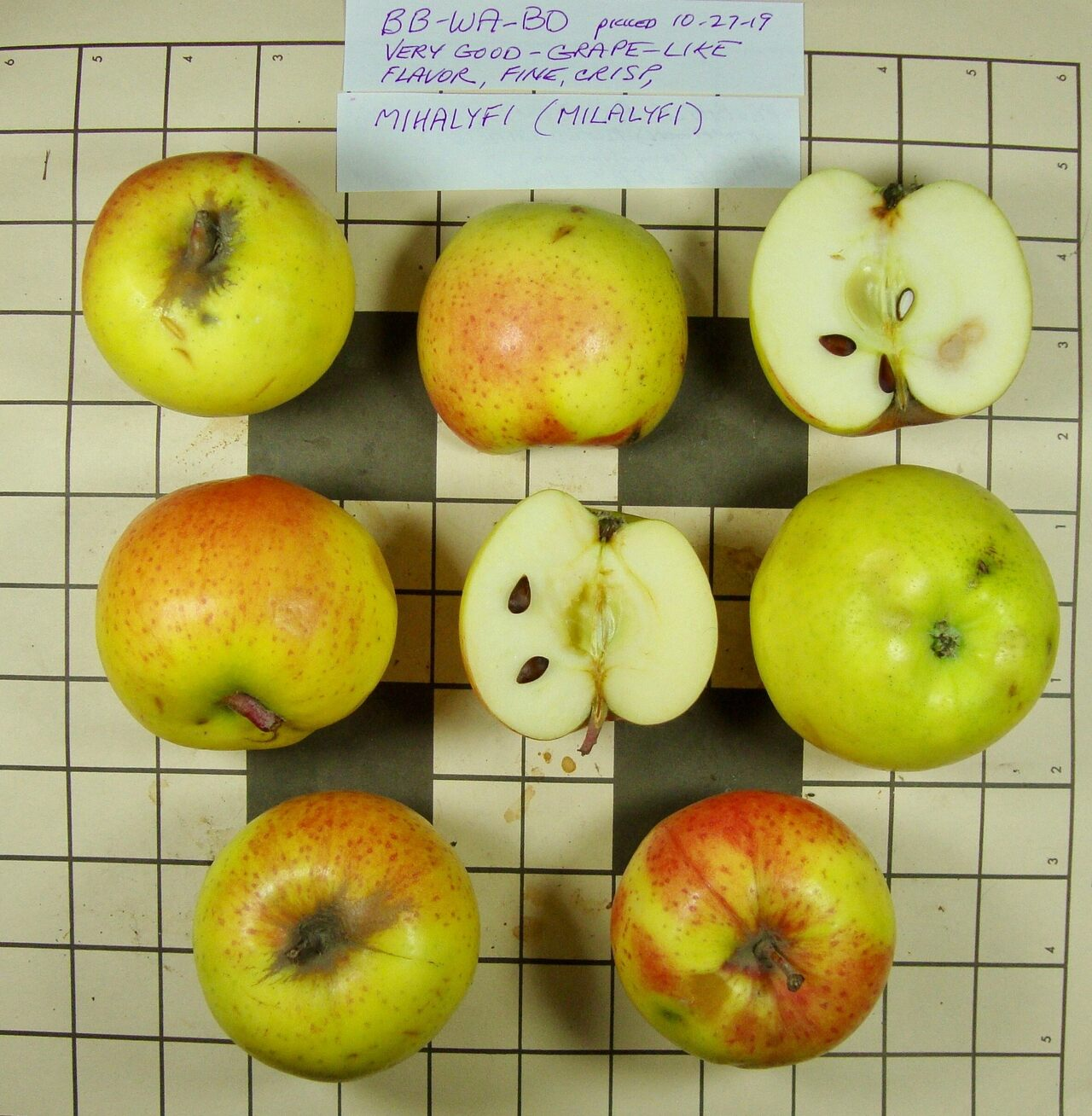 TOC identified the Mihalyfi apple among those sent by the Lost Apple Project.