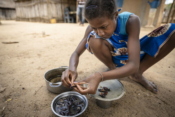 To Save Madagascar's Wildlife, an Entomologist Is Helping Revive a Bug-Based Cuisine