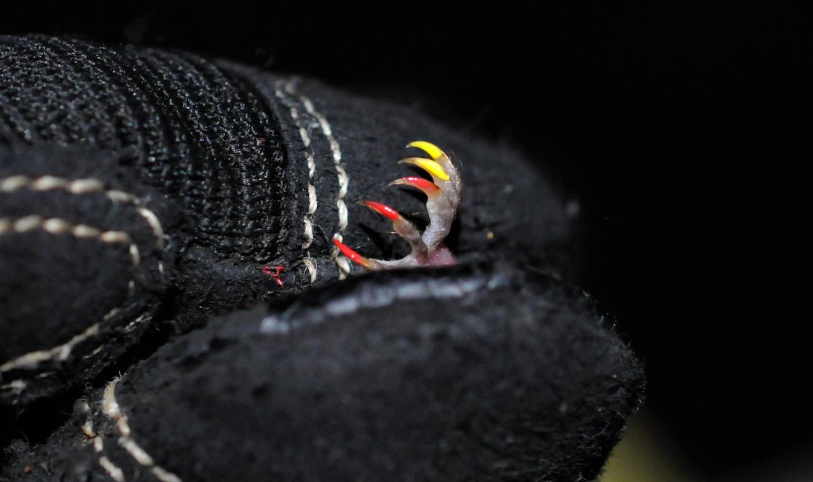 A tiny, spooky pedicure.