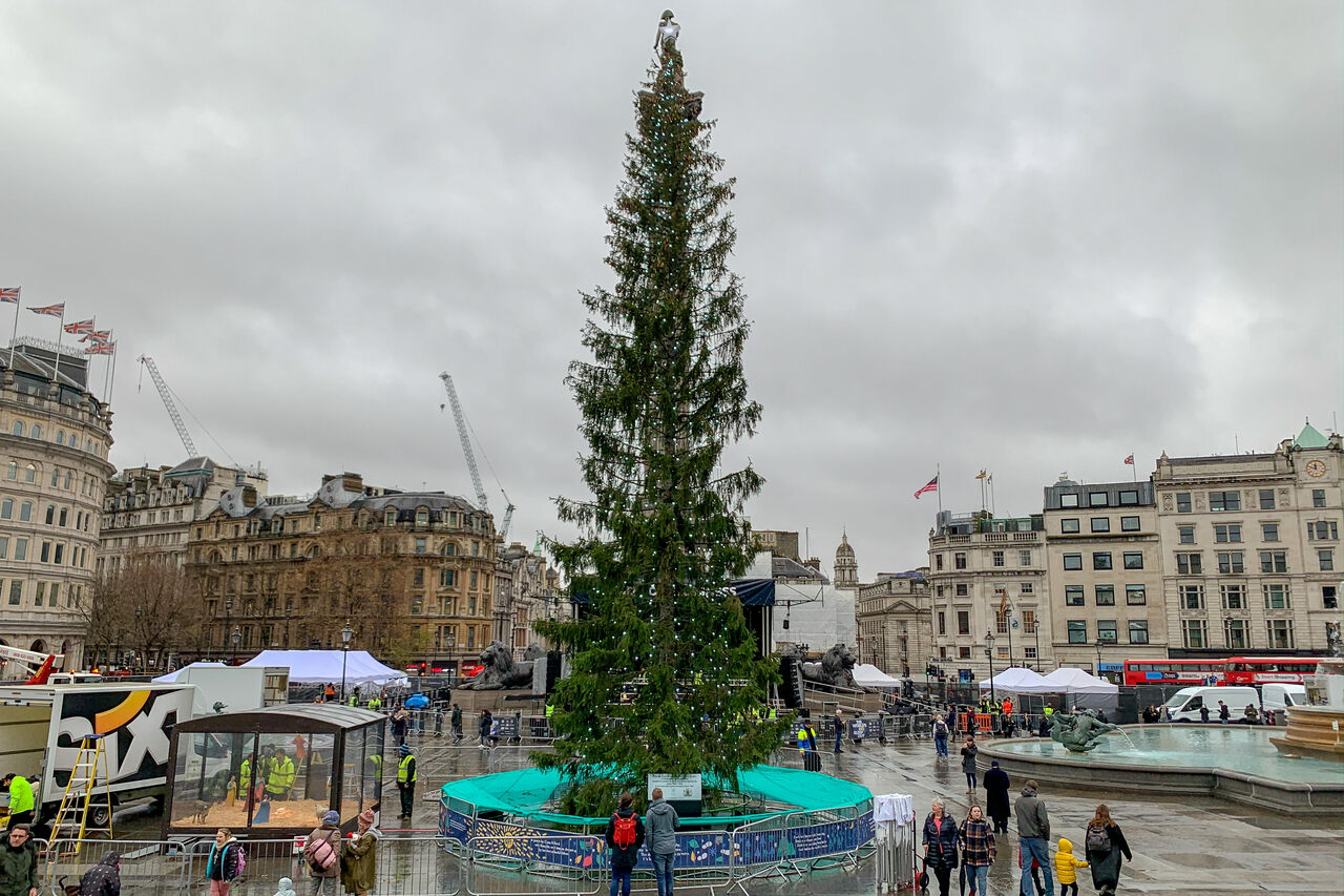 The tree in London's Trafalgar Square is already the butt of jokes.