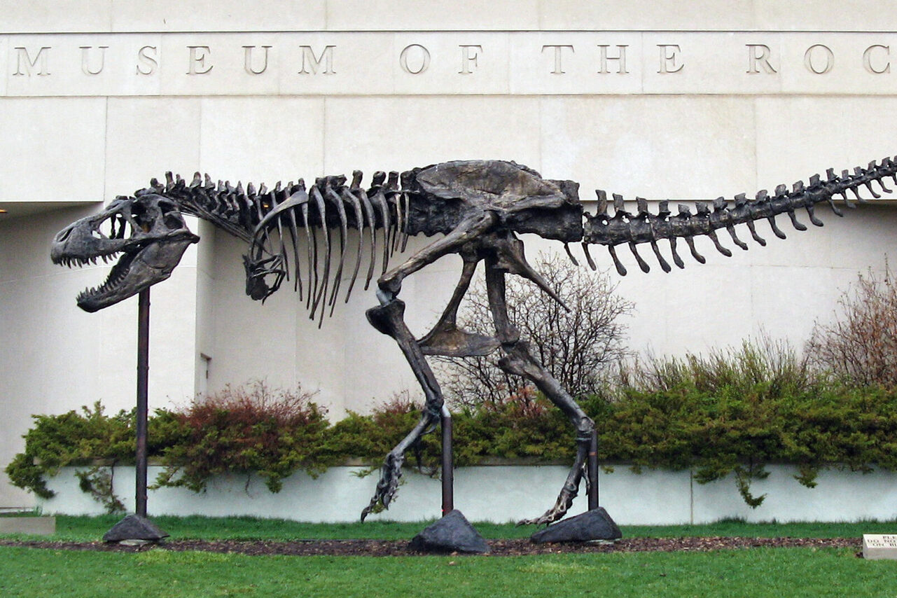 "A bronze cast of the Army-owned Wankel's T. Rex, affectionately nicknamed ""Big Mike,"" guards the Museum of the Rockies."
