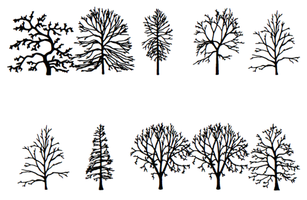 Read The Tree Leaves With An Artist S Invented Tree Font