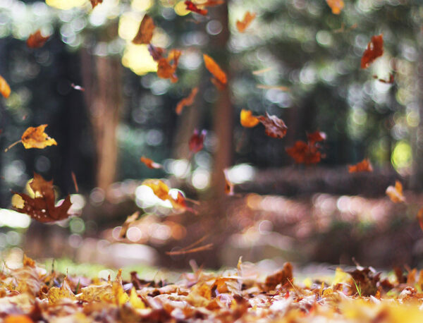 Why Does the Season Before Winter Have Two Names?