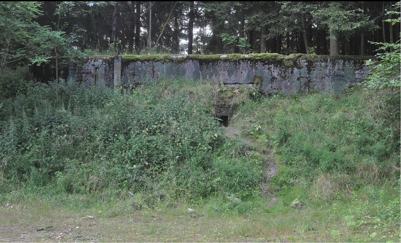 Deep in a forest in western Poland, is an abandoned Soviet bunker with an unusual ant situation.