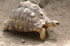 LOST: A Rare Tortoise