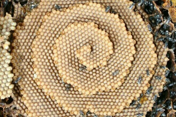 Giant Sprawling Yellow Jacket Nests Are Surging In Alabama Atlas
