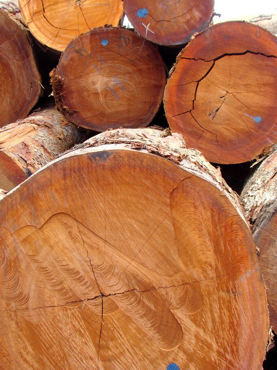 Native to equatorial Africa, kevazingo is also called <em>bubinga</em>, <em>bovenga</em>, <em>amazique</em>, and African rosewood.