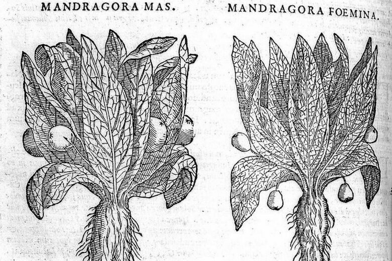 The History and Uses of the Magical Mandrake, According to Modern