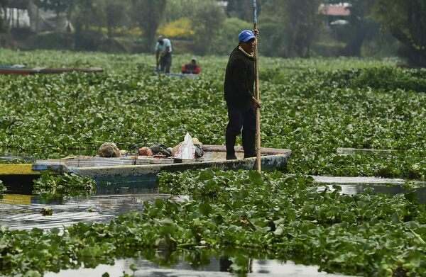 In Mexico City, the Coronavirus Is Bringing Back Aztec-Era 'Floating Gardens'