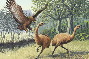 Two unfortunate moa fleeing a Haast's eagle.