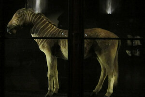 All That Remains: A Haunting Gallery of Extinct Animals in Paris