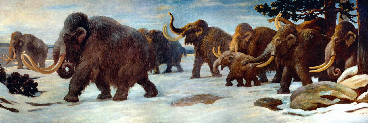 Woolly mammoths in a mural at the American Museum of Natural History in New York.
