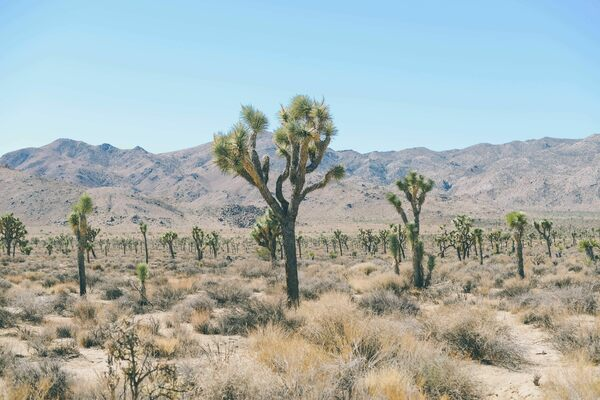 Desert Canvas: Art of Joshua Tree and the Mojave - Atlas Obscura Trips