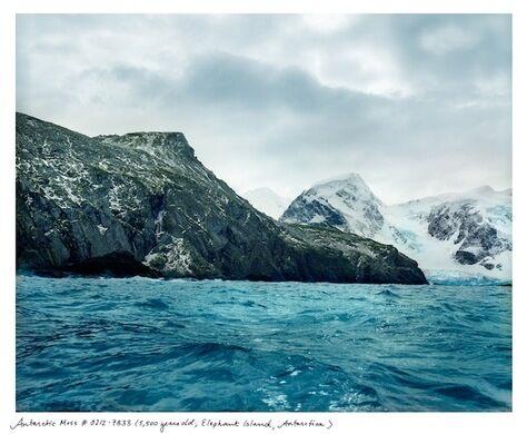 Antarctic Moss (5,500 years old; Elephant Island, Antarctica)