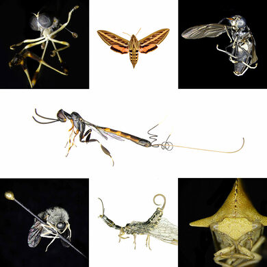 Insects of BioSCAN