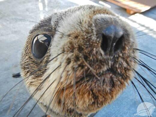 rescued sea lion