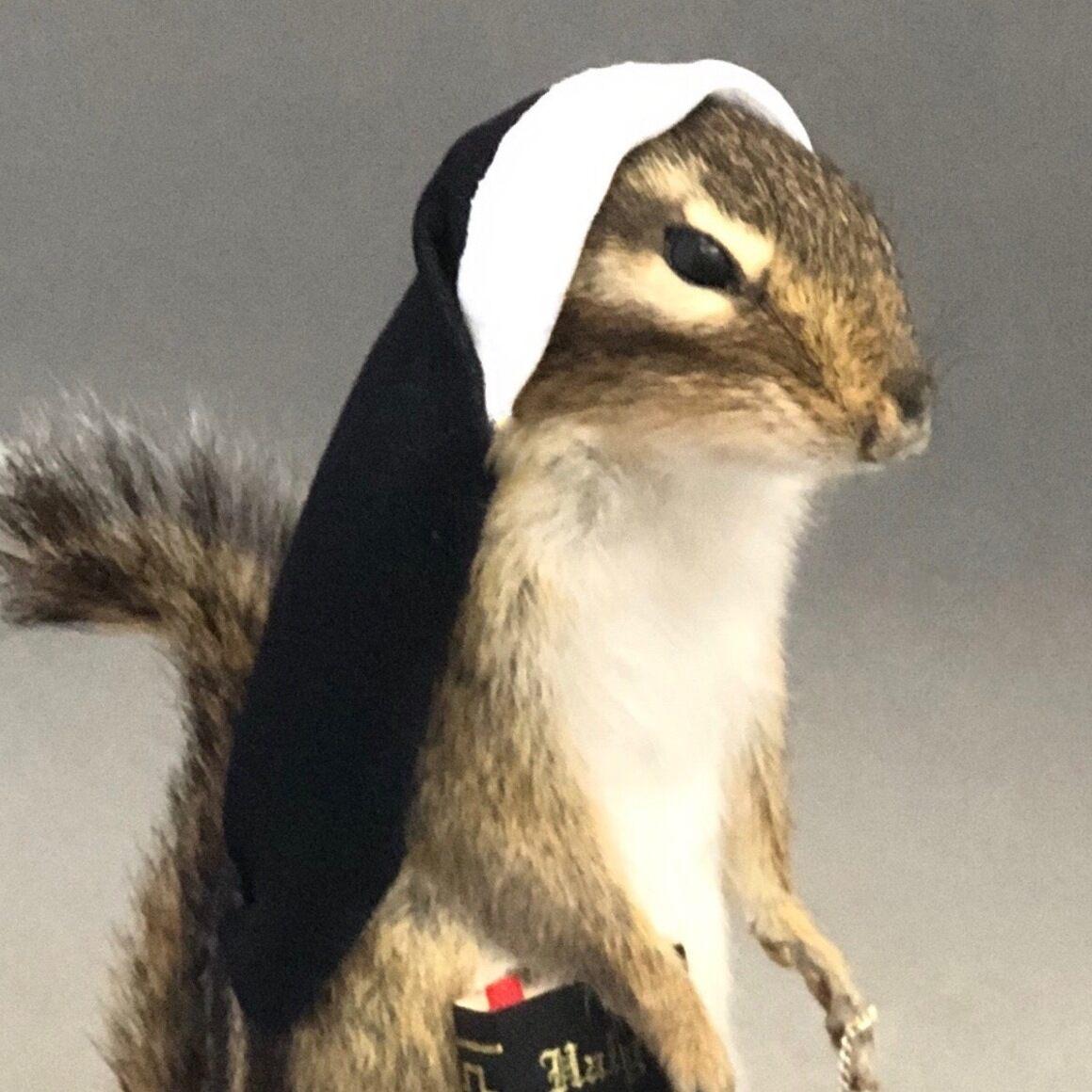 Chipmunk Nun